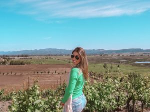vinícolas da califórnia nos arredores de San Francisco