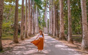 árvores famosas - palmeiras imperiais do jardim botânico RJ