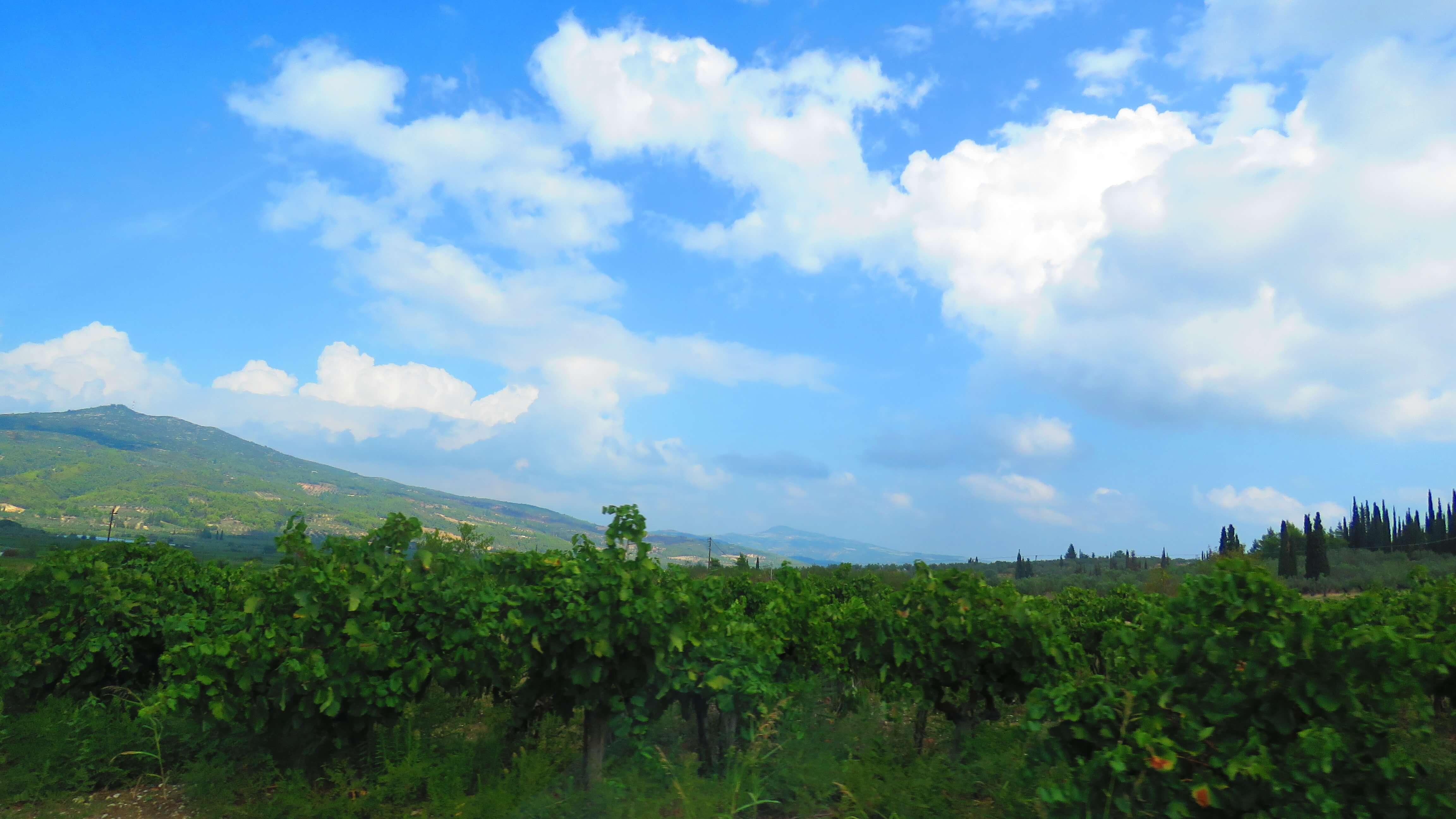 vinicolas-gregas-2