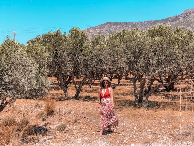 curiosidades sobre a Grécia - plantações de oliveiras