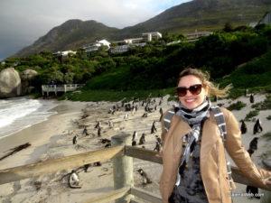 Nesta atração em Cape Town, os pinguins estão em seu habitat natural!! O santuário foi construído na praia para acompanhamento da espécie, mas os bichos não estão presos.