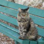 Gatos na Acropole de Atenas