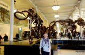 Museu Americano de História Natural de Nova York (1)