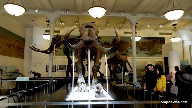Fóssei de dinossauros do Museu de Nova York
