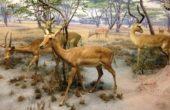 Museu Americano de História Natural de Nova York (5)