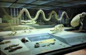 Museu Americano de História Natural de Nova York (6)
