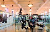 Museu Americano de História Natural de Nova York (7)