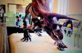 Museu Americano de História Natural de Nova York – Uma noite no Museu