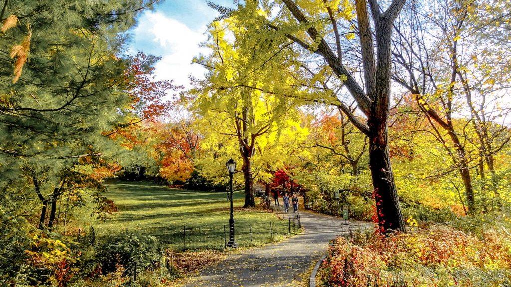 As cores do central park no outono em Nova York